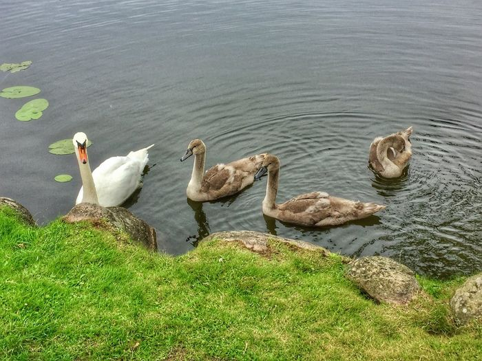 Ducks Wildlife