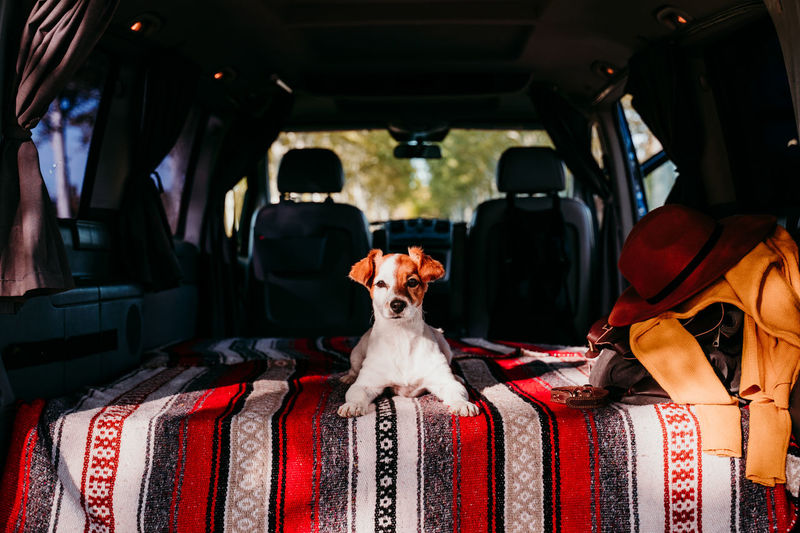 Portrait of dog sitting in van
