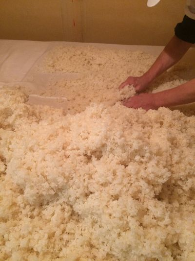 We are making Japanese natural yeast.This is steamed rice and kouji.The kouji will grow up.