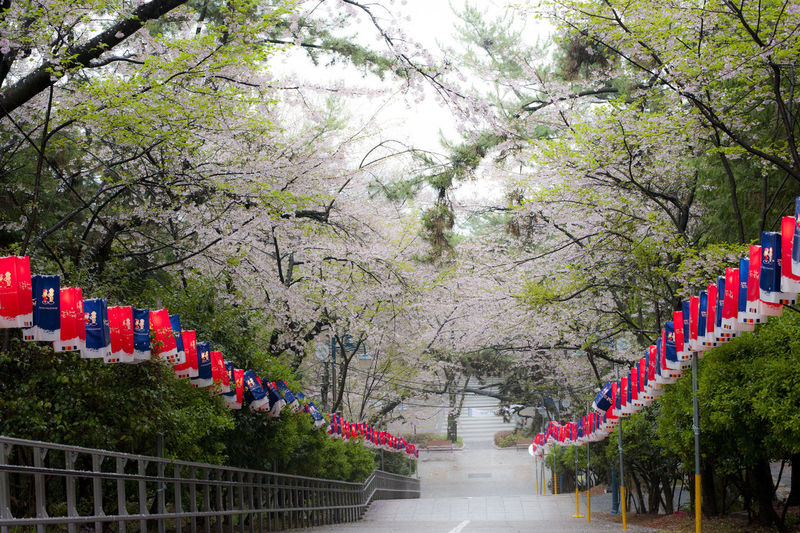 Beauty In Nature Bright Cherry Blossom Cherry Blossoms Culture Diminishing Perspective Growth In A Row Nature No People Optimistic Outdoors Sky Stairways The Way Forward Tourism Travel Destinations Tree