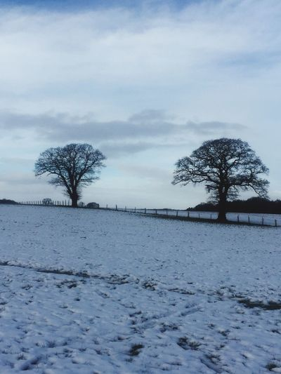 Winter Cold Temperature Snow Tranquility Beauty In Nature Tree Nature Cold Frozen Tranquil Scene Weather Lone Bare Tree