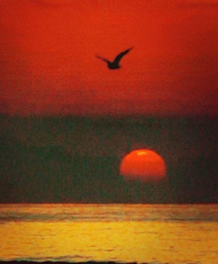 Sea Sunrise Alba Mar Mediterrani Albada