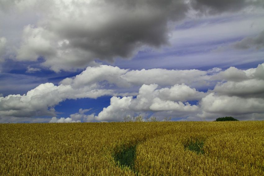 Summer Time Farmland. Wheat fields ready for Harvest Beauty In Nature Blue Cloud - Sky Cloudscape Day Dramatic Sky Farmland Field Growth Nature Non-urban Scene Outdoors Rural Scene Scenics Sky The Cotswolds Tourism Tranquil Scene Tranquility