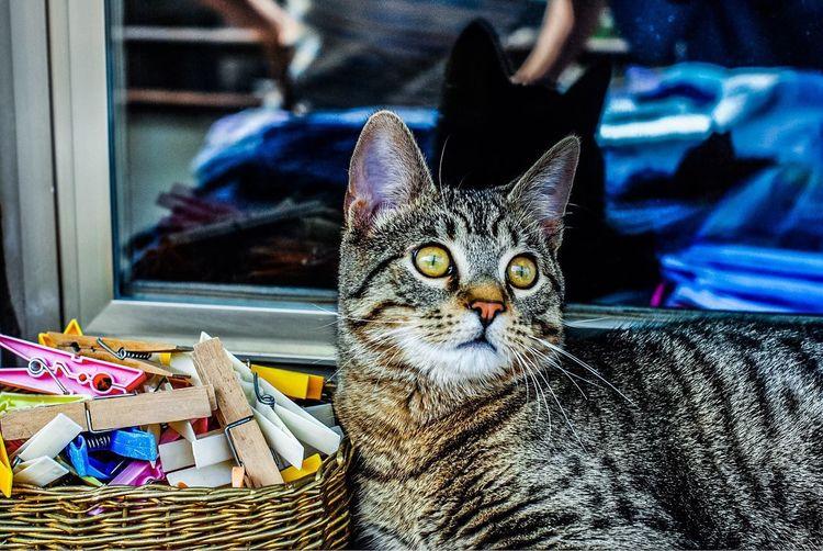 Portrait of a cat in basket