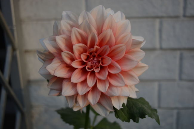 Flowers Redwhite