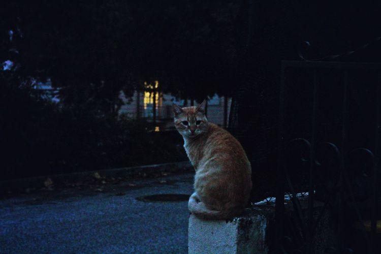 Full length of man sitting in illuminated park against sky at night