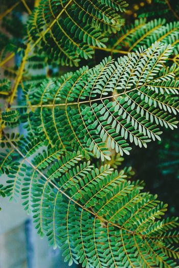 Nature Plant Close-up