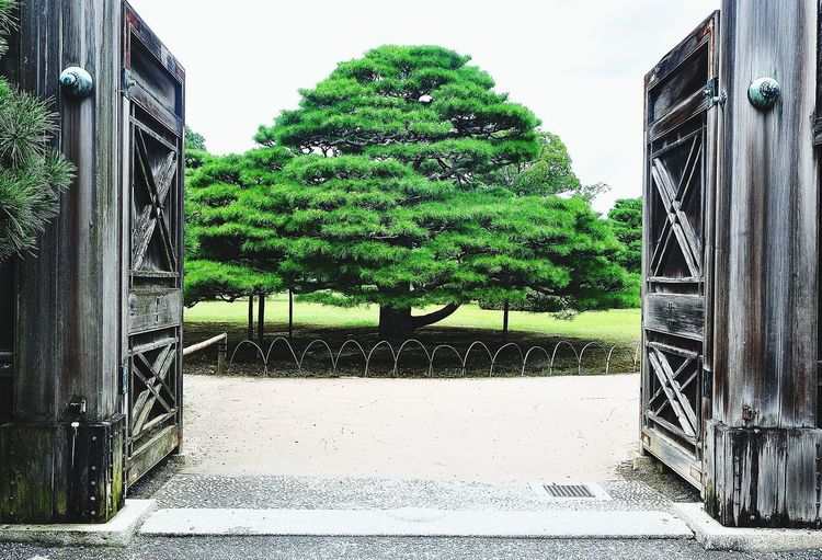 the Tree Kyoto
