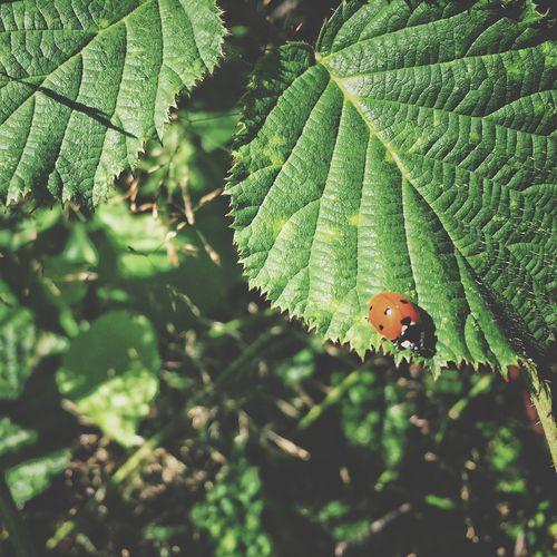 Ladybug Slow Life Forest
