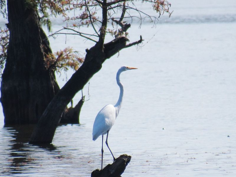Animal Wildlife Bird Heron Water One Animal Animal Themes No People Day