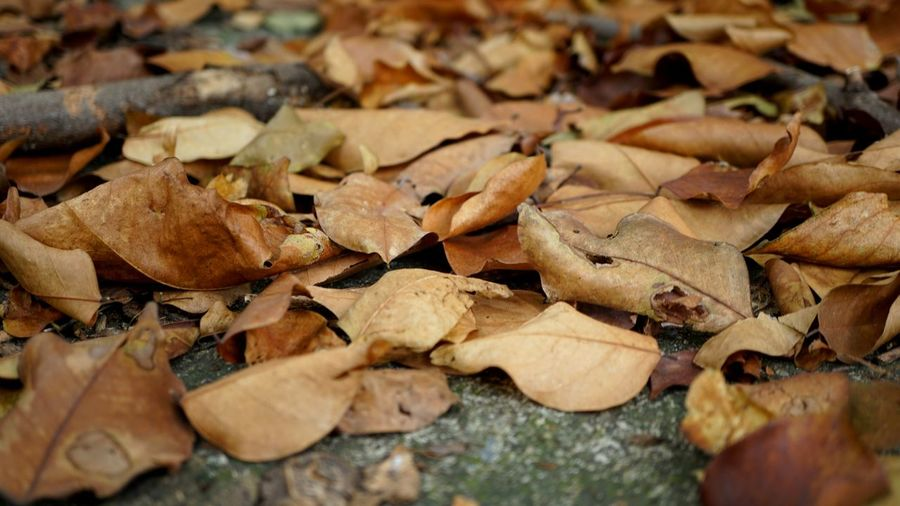 Full frame shot of dried autumn leaves