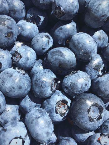 Vaccinium Uliginosum Blueberry голубика лохина Berries