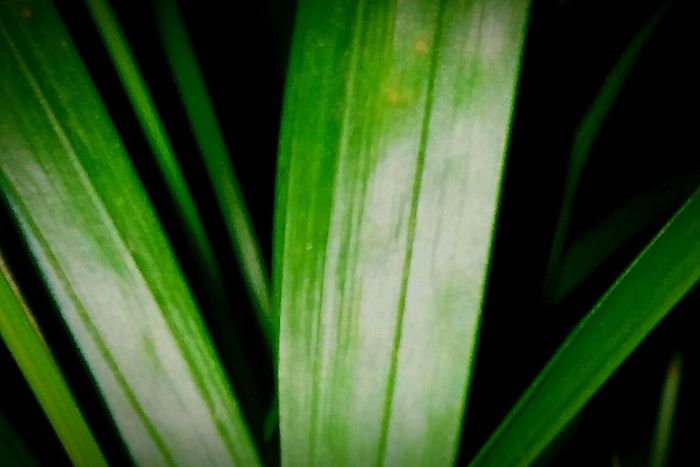 Pattern Pieces , Surfaces & Textures Eye4photography  Showcase: January Open Edit Taking Photos Plant Leaves