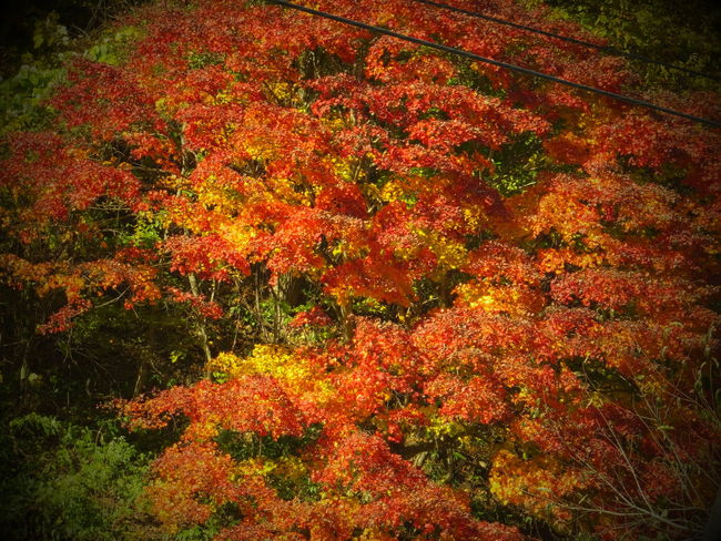 Colored Leaves Iwate Japan Tohoku Tono 岩手 東北 紅葉 遠野
