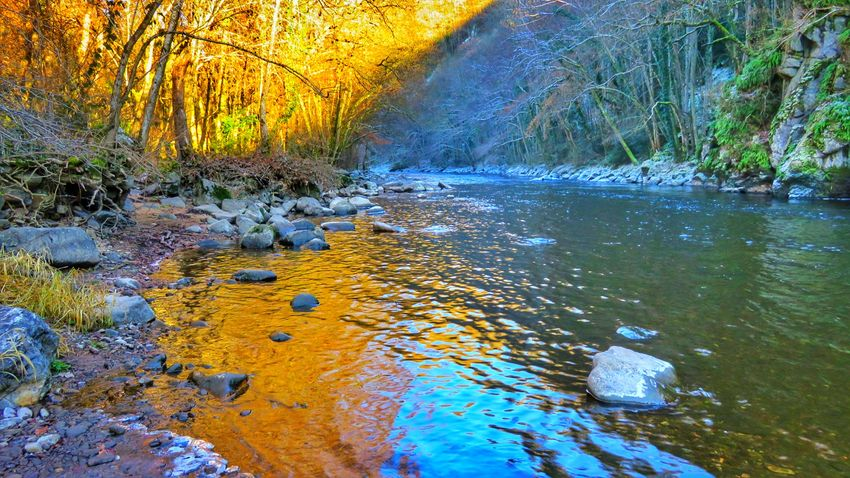 Tree Nature Water No People Beauty In Nature Outdoors Tranquility Day Scenics Close-up Sky Beautiful Colors Winter Beautiful Nature Beauty In Nature Tranquility Cold Temperature River View Canon Canonphotography Canonpowershot Reflection Auvergne Allier