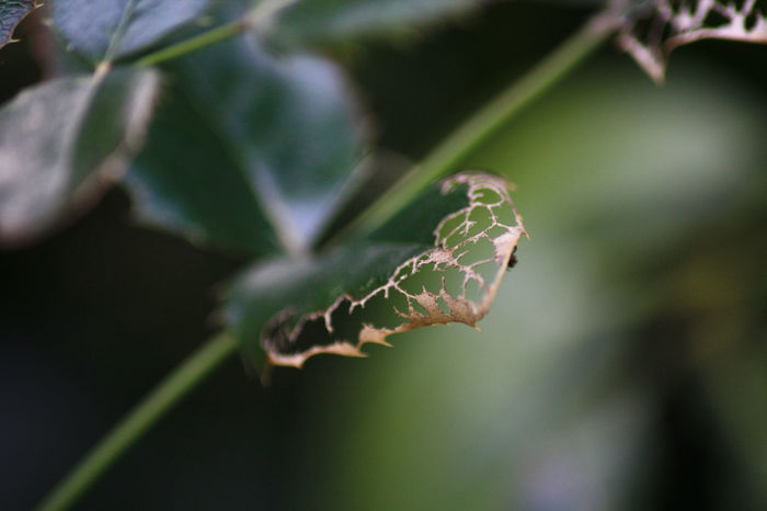 Blatt Blattdesign, Death Leben Natur Nature Sterben Tot Vergänglichkeit