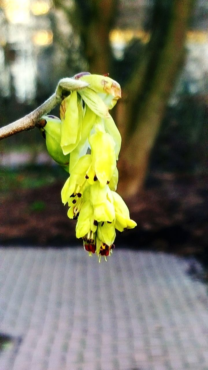 flower, fragility, growth, nature, focus on foreground, petal, close-up, beauty in nature, freshness, yellow, blossom, springtime, day, outdoors, no people, flower head, plant