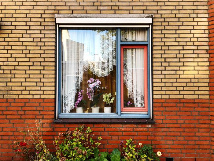 Flowers growing on window of building