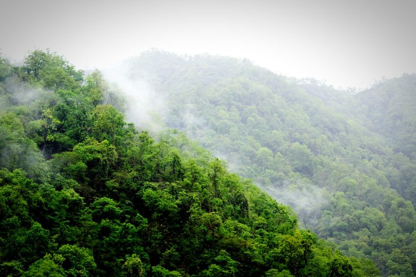 IamNewHere KentuckyTho EyeEm Selects EyeEmNewHere Raining Rainy Season Sunset #sun #clouds #skylovers #sky #nature #beautifulinnature #naturalbeauty #photography #landscape Mountain View Mountain Peak Foggy Morning Mountain Fog Tree Tea Crop Forest Fog Mountain Rural Scene Sky Landscape Green Color Pine Tree Evergreen Tree The Great Outdoors - 2018 EyeEm Awards