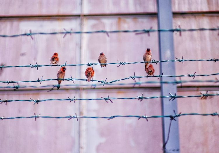 Birds perching on fence