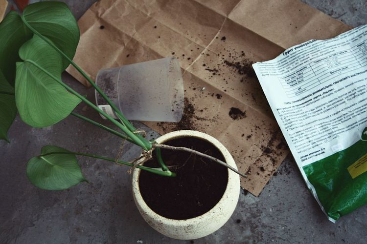 Gardening Leaf High Angle View Plant Part Plant Day Nature Growth Directly Above Container Land Bucket No People Outdoors Gardening Close-up Paper Table Green Color Potted Plant Field