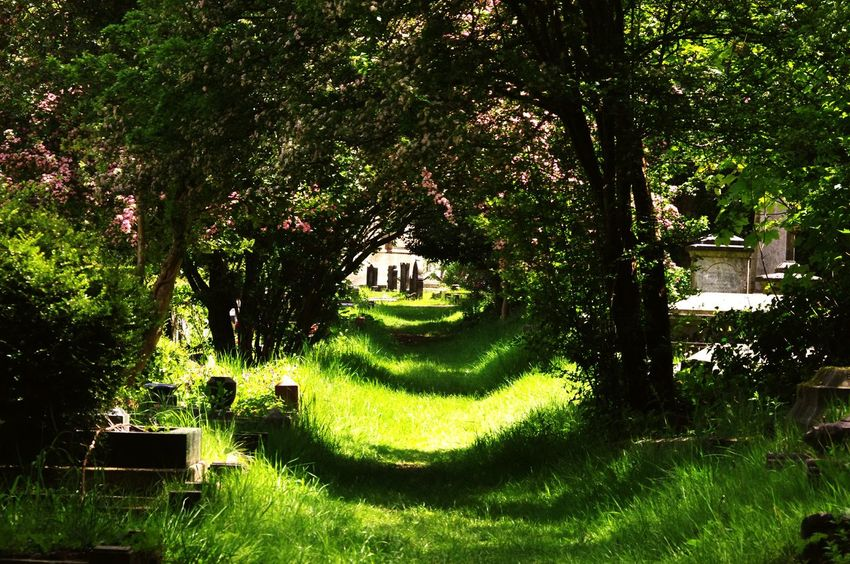 Nature On Your Doorstep Nature Walking Around The Cemetery Bristol Uk Yeah Springtime! Relaxing Taking Photos