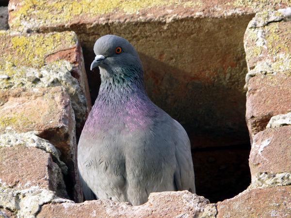 Dove Bird Nest Wall
