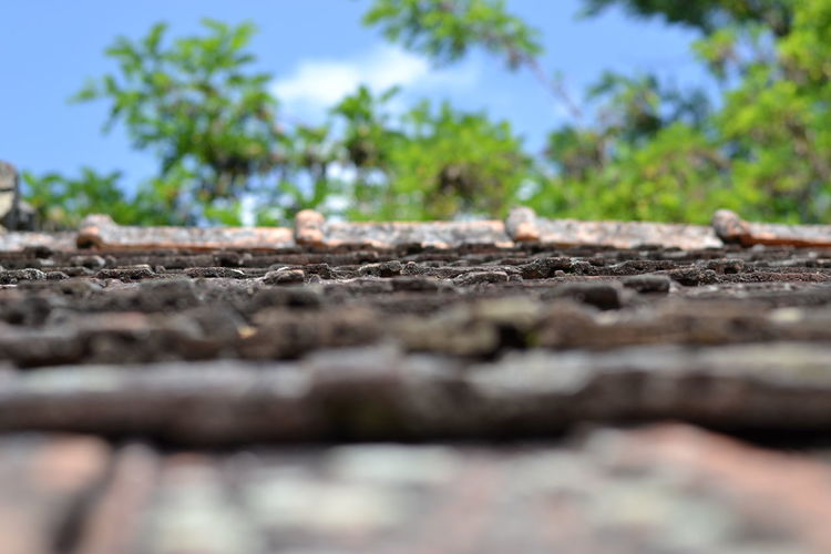 Old Roof Beauty In Nature Day Green Color Growing Growth Nature No People Non-urban Scene Outdoors Plant Remote Roof Scenics Selective Focus Shore Sky Surface Level Tranquil Scene Tranquility
