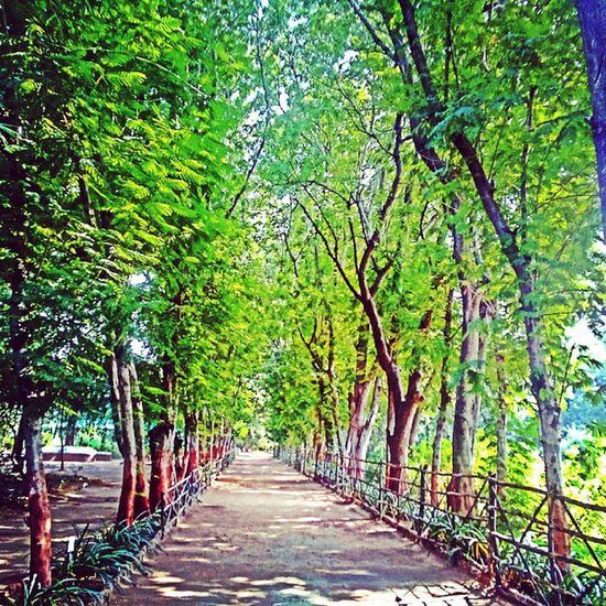Garden Ahmedabad Indroda Nationalpark nature_shooters nature trees green hdr hdrfusion