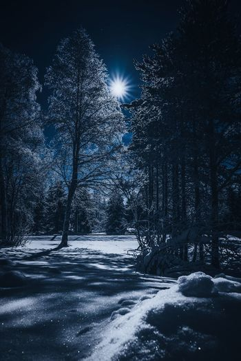 Full moon and beautiful winter night Tree Snow Winter Cold Temperature No People Nature Beauty In Nature Tranquility Tranquil Scene Sky Night Outdoors Landscape Moon Lapland, Finland Nature_collection Clear Sky Frozen Scenics Travel Forest Blue Star - Space Hello World Freshness