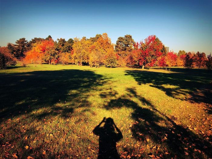 Shadow of person on field during autumn