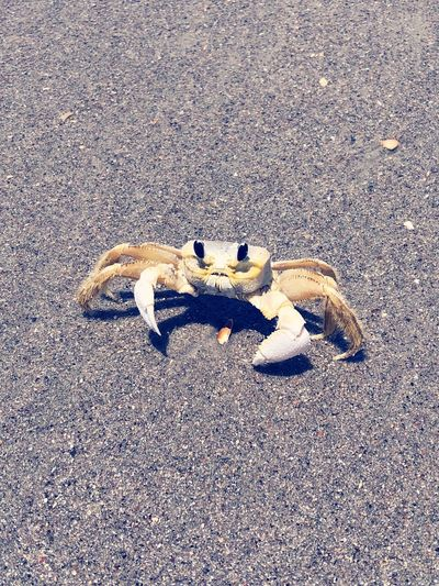 Ghost crab Land