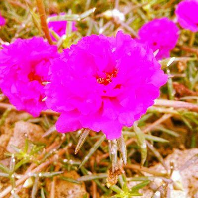 Travel Flower Flowers Betweenthebush Attractive Ontheroad Loveit Beautiful Coimbatore Takeapicture