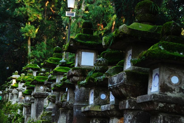 Traveling Nara,Japan 灯籠 苔