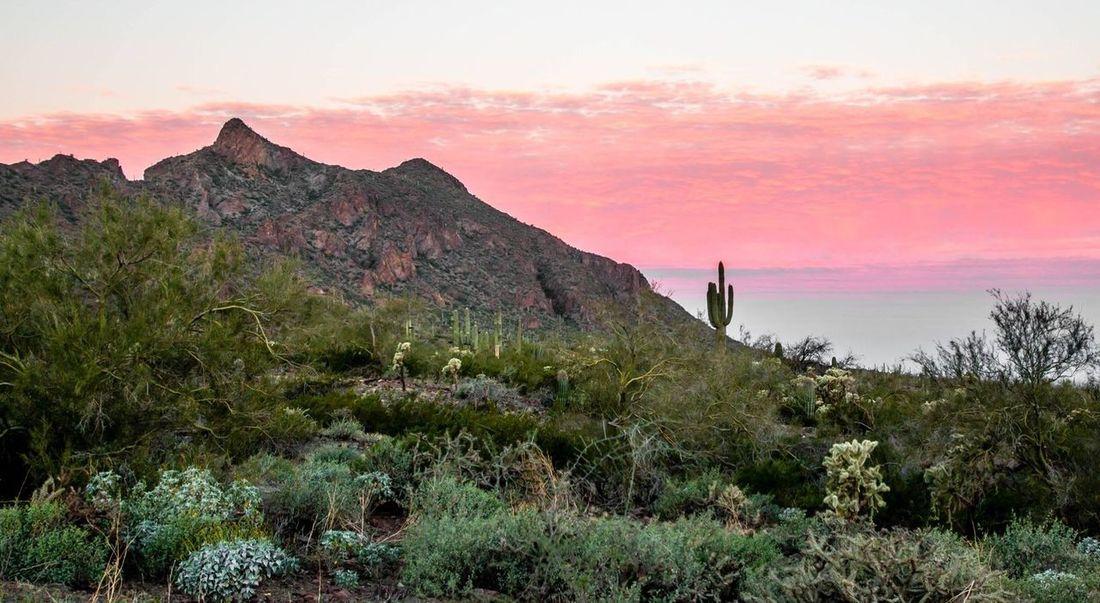 Desert Desert Beauty Landscape Nature Physical Geography Sky Sunrise Tranquil Scene Tuscon