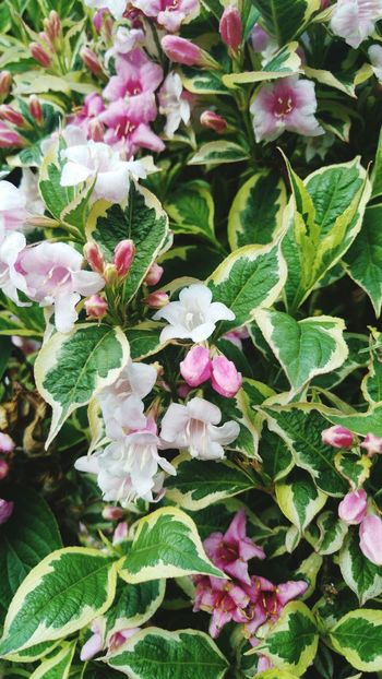 Multicolour Leaf Growth Plant Green Color Nature Freshness Pink Flowers White Flowers Fragility Petal High Angle View Beauty In Nature Outdoors No People Flower Head Close-up