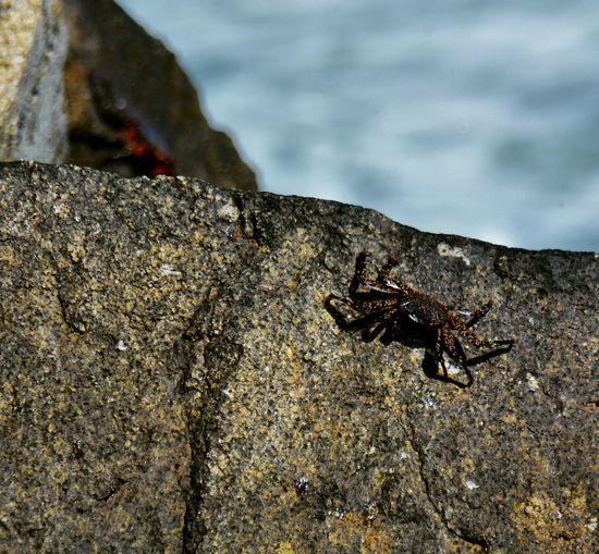 cangrejo en las rocas Beach Photography Beach Day Crab On The Beach