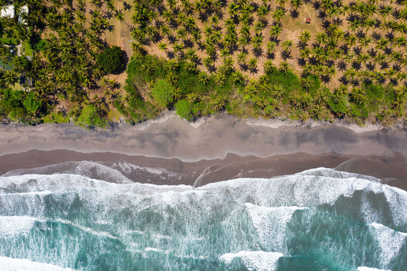 Aerial view of trees and sea