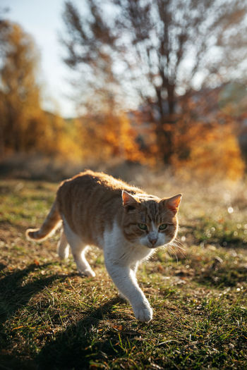 Cat standing in a field