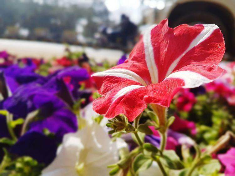 Beauty In Nature Flower Flower Head Nature Plant Satish Pintu Artist