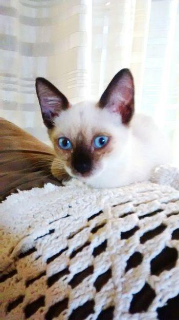 Cute Pets My Pets Cat Mycatandme Lovepet♥