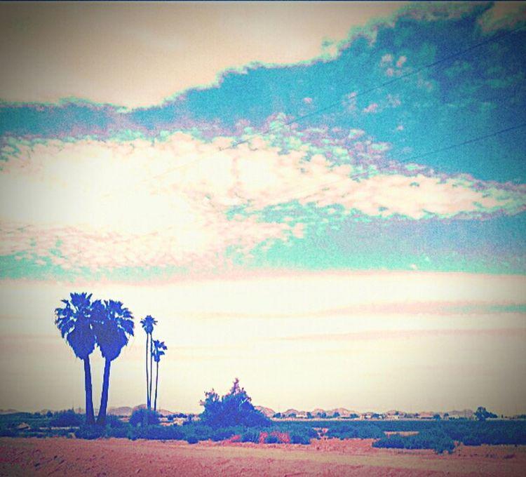 Arizona, The Beautiful Clouds Sky Palm Trees