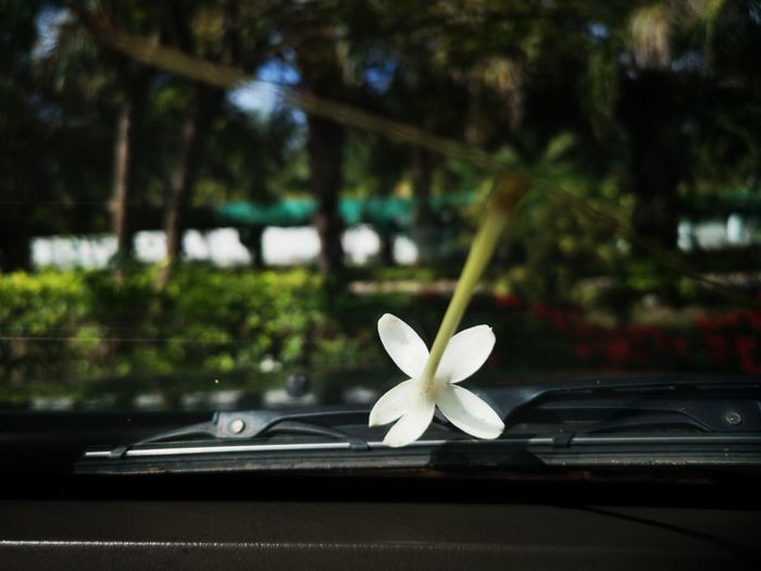 Close-up of white flower in car
