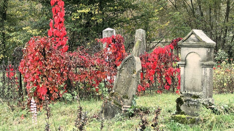 Autumn Autumn colors Cemetery Cemetery Photography Beauty In Nature Cemetery Day Flower Grass Gravestone Graveyard Growth Nature No People Outdoors Plant Red Tombstones Tree