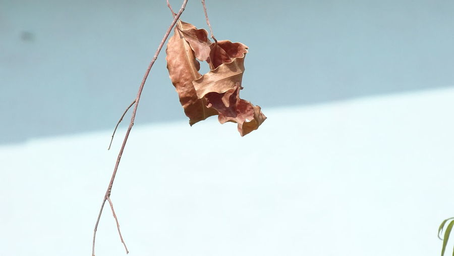Hanging Day No People Outdoors Close-up Nature Sky Dryleaf Dryleaves Dryleavesnbranches Nature