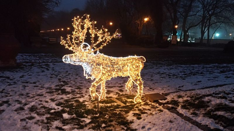 Night Illuminated Fantasy Animal Christmas Christmas Decoration Outdoors Representing No People Leopard Xmas Decorations Parks And Recreation Park - Man Made Space Snow ❄ Park View Drastic Edit Wintertime Drama Effect Reindeers Artistic Edit Christmas Artistic Expression Reindeer Dramatic Light No Edit/no Filter