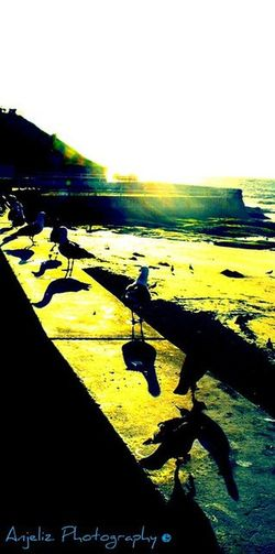 SanDiegoSunset AnjelizPhotography Seascape Seagulls Seagull Seagulls And Sea Seagull Serenity Shadow Shore Silhouette Tranquility Ocean Coast