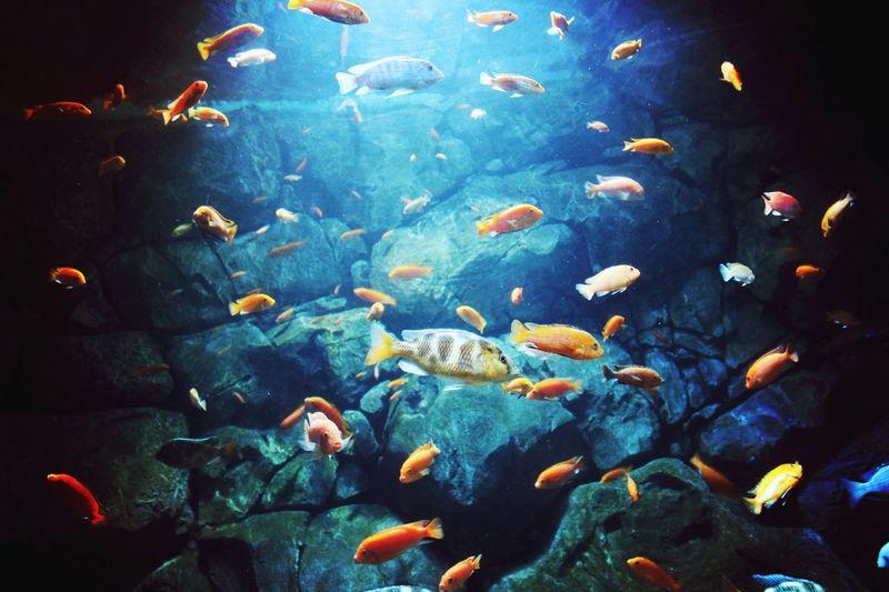 океанариум UnderSea Sea Life Swimming Underwater Motion Multi Colored Fish Water Sea School Of Fish Aquarium