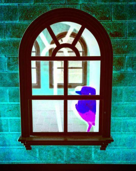 Robbin xxxxxxx Nefilian Xxxxxxx Abstract Art Abstract Photography Robbin Bird Dollshouse Window X