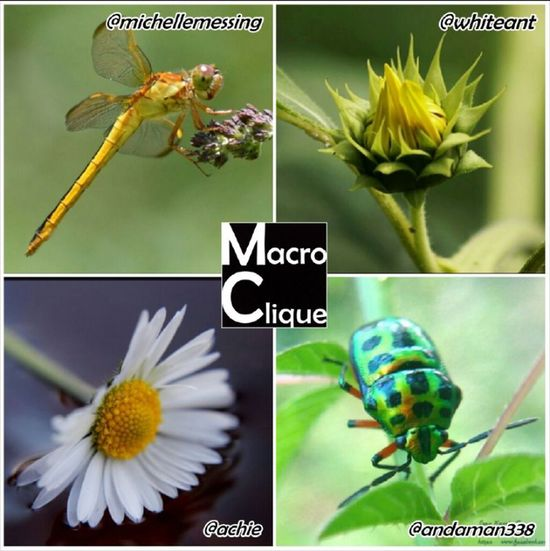 Thank you @macroclique for the weekly feature (top left). For your chance to be selected tag your Macro shoots to the Macroclique album! Award Center